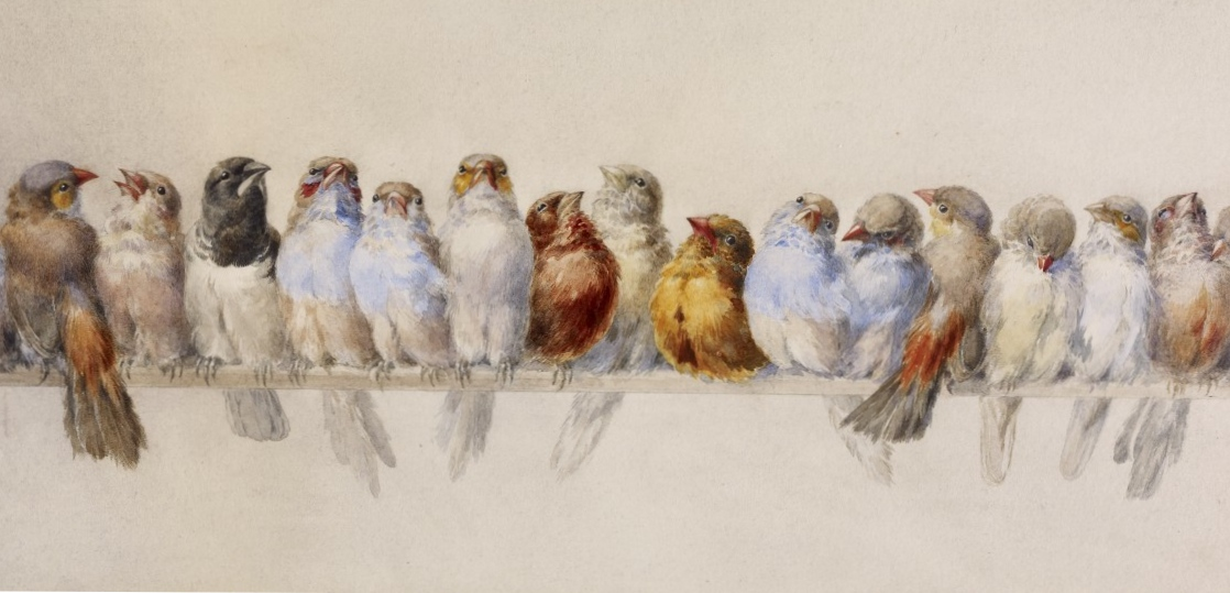 birds plain